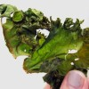 kale chips - my afternoon snack