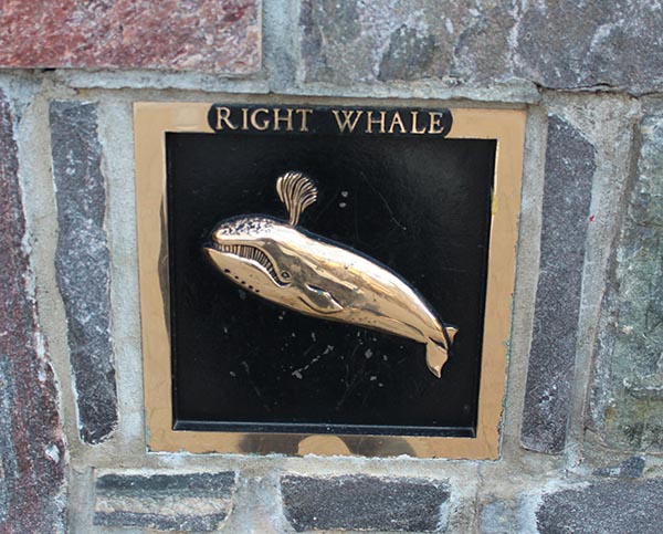 Fort Green Right Whale
