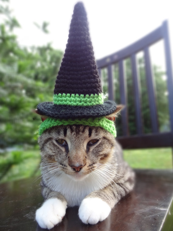 Witch Hat Cat Halloween Costume